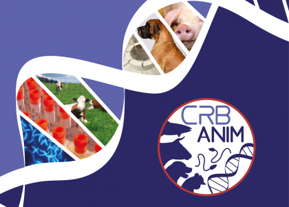 Le CRB-Anim
